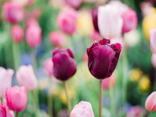 20 Easy Spring Wreath Ideas