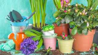 12 DIY Tips for Spring Gardening