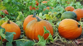 4 Pumpkin Patches in East Texas To Visit This Fall