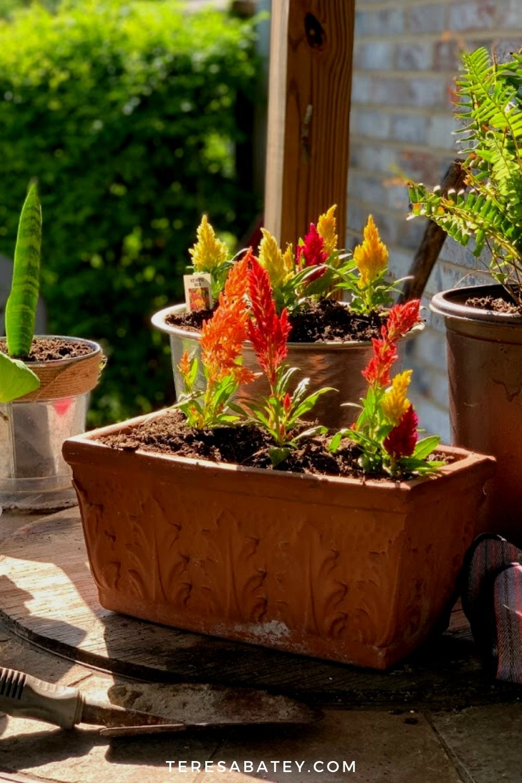 DIY  Raised Wild Flower Garden