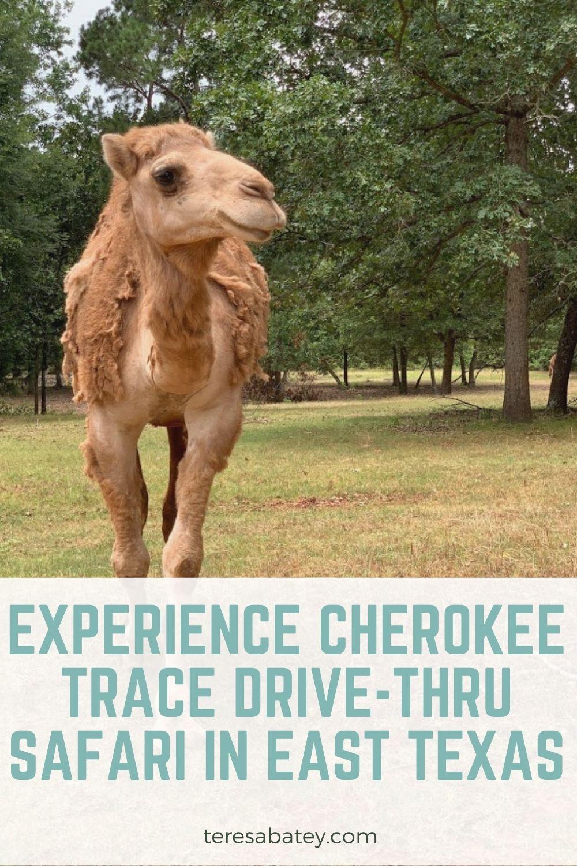 Experience Cherokee Trace Drive-Thru Safari in East Texas
