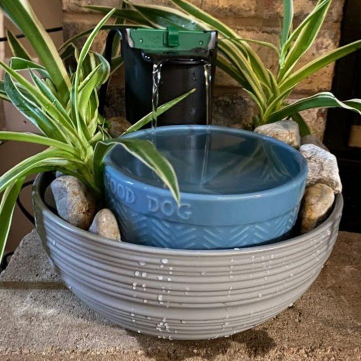 DIY Pet Fountain